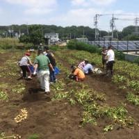 3団体合同収穫体験を