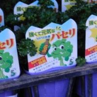 野菜たちが・・・ & Ken-chan & アレナリア ブリザード