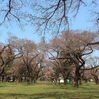 らんまる&まりもちゃんと小金井公園へ