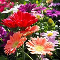 長居植物園「早春の草花展」から その2