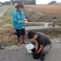 JA古川平成28年産小麦刈取り適期判定会が開催されました