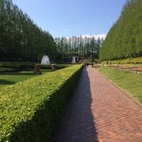 ついに退院・・・相模原公園でリハビリウォーク!