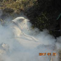 煙い暖かいがー織姫  椿   水仙