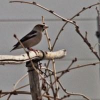 庭の小鳥たち