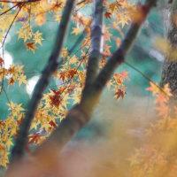 秋の散歩♪