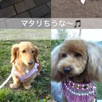 プティ•ガトー•アソルティ♪甘い誘惑ちうヽ(´▽`)/