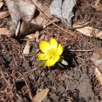 早春のイングリッシュガーデン
