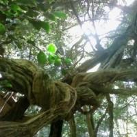 7月26日 tarot reading &Reiki healing(女性限定)