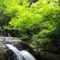 速報 新緑の滝