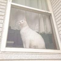 7月15日(金)のつぶやき 白猫 ミルコ 置物 ビンス・マクマホン WWE ポケモンGO