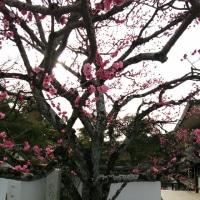 醍醐寺の桜の下で