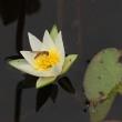今日の平岡公園から野の花を・・