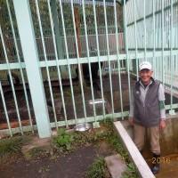 今日は、高代寺の獣舎で保護飼育している「とよ君」の獣舎清掃。