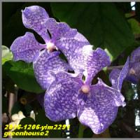 image2291 温室の花2