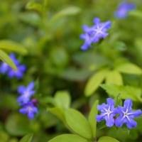 春を彩る野草 その2(赤塚植物園2017年4月23日撮影)