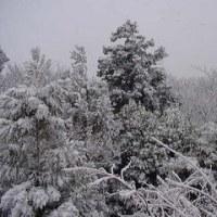 雪ですね~(^_^;)