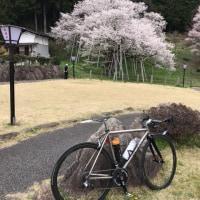 臥龍桜を見がてら、1時間半のライド。