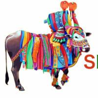 南インド映画祭が開催される!