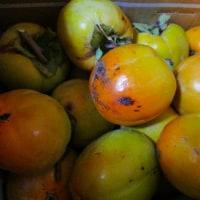 日記(10.21)野菜