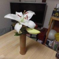 大花の桃色ダリア他