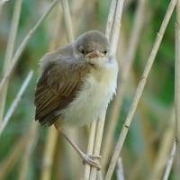 目的の鳥に会えない日が続く…(笑
