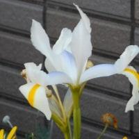 四月の最終日・花おさらい