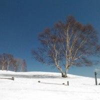 冬・菅平牧場