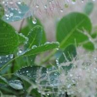 又雨降りだ~・・・!!