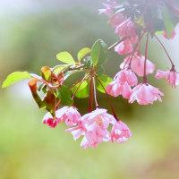 花かいどう (花 4358)