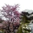 2012-04-22 花曇り