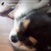f(x) Amber IG 17.05.13〜22 update
