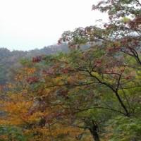 大山紅葉前線