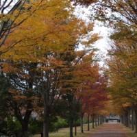 遊歩道秋色