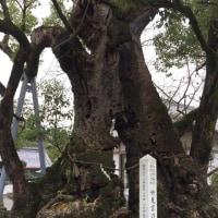 八代神社(妙見宮)