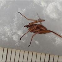 雪の上の虫 - 3