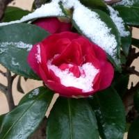 雪がまた降った