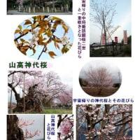 桜の名所めぐり <宇宙桜>