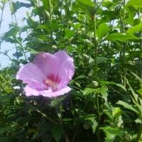 野の花でさえ。