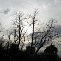 冬枯れと夕日…多摩川冬景色シリーズ