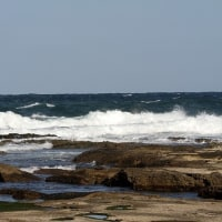 2/20探鳥記録写真(狩尾岬の鳥たち:イソヒヨドリ、ホオジロ、ウミアイサ他)