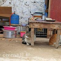 モロッコの猫ちゃん、ロバさん