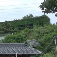愛媛県青島の島旅 11回目