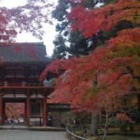 紅葉 室生寺