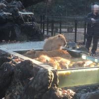 プーズーを見に、こども動物自然公園へ