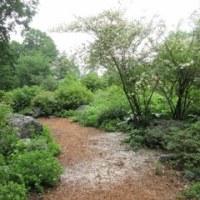 赤城自然園・・・サポーター特別開園。行ってきました・・・