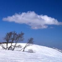 ブナ の寒樹と白い雲
