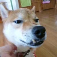 2016 10/23★今日はたろう君とキラ君~^m^そして、にゃ~ちゃん保護の巻(*_*;