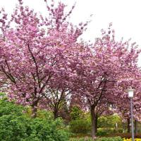 プランテン・ウン・ブロンメン公園の訪問