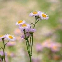 見慣れた草花ですが、写さずにはいられない可麗さ