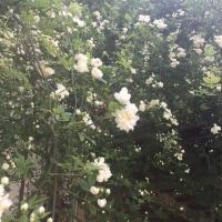 庭の花ー2